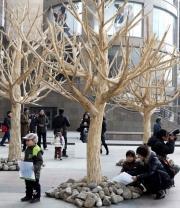 Greenpeace Plants Chopstick Forest in Beijing