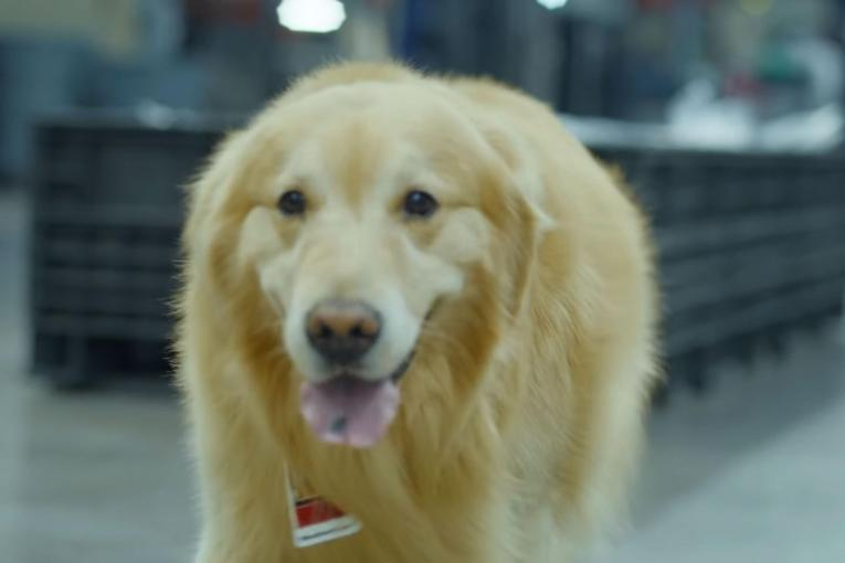 WeatherTech focuses on pets instead of America theme in Super Bowl ad