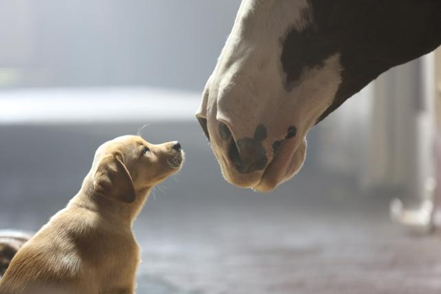 Further Review: Budweiser's 'Puppy Love' Grabs the Pre-Super Bowl Crown