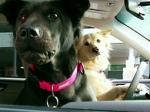 Subaru Puts Dogs in the Driver Seat for New Campaign