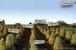 Toohey's Extra Dry's bountiful web harvest