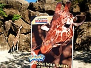 Animal Attraction: Advertising at the Zoo